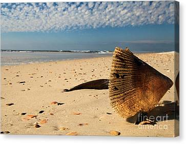 Monster Clam Canvas Print by Adam Jewell