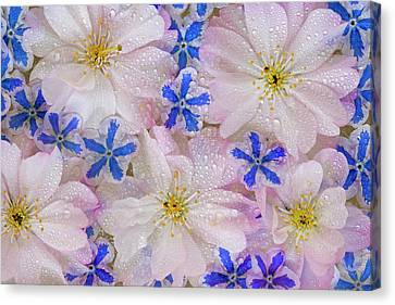 Montage Of Cherry Blossoms And Blue Canvas Print by Jaynes Gallery