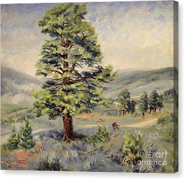 Montana Grazer 1935 Canvas Print