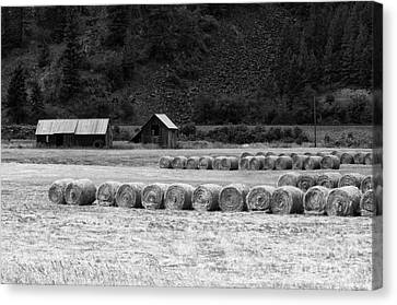 Canvas Print featuring the photograph Montana Harvest B/w by Vinnie Oakes