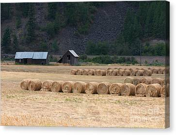 Canvas Print featuring the photograph Montana Hay Harvest by Vinnie Oakes
