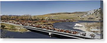 Montana Horse Round Up Canvas Print