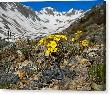 Blue Lakes Colorado Wildflowers Canvas Print by Dan Miller
