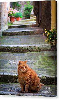Montepulciano Cat Canvas Print by Inge Johnsson