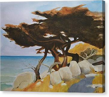 Monterey Cypress Canvas Print by Ed  Heaton