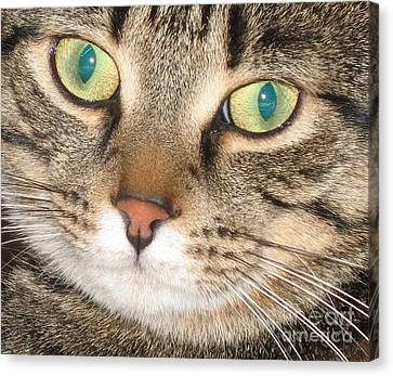 Monty The Cat Canvas Print by Jolanta Anna Karolska