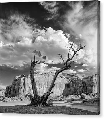 Northern Arizona Canvas Print - Monument Valley Juniper Tree And Mesa by Silvio Ligutti