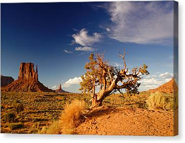Northern Arizona Canvas Print - Monument Valley Lone Juniper And West Mitten. by Silvio Ligutti