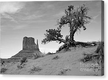 Monument Valley Tree And Monolith Scenic Landscape Black And White Canvas Print by Shawn O'Brien