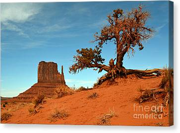 Monument Valley Tree And Monolith Scenic Landscape Canvas Print by Shawn O'Brien