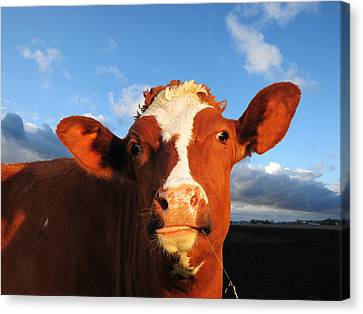Moo Don't Say Cow Canvas Print
