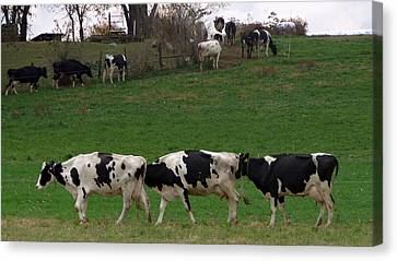 Amish Farms Canvas Print - Moo Train by Joseph Skompski