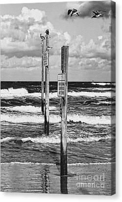 Moody Beach Day Canvas Print by Deborah Benoit