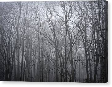Moody Outlook Canvas Print by Mary Zeman