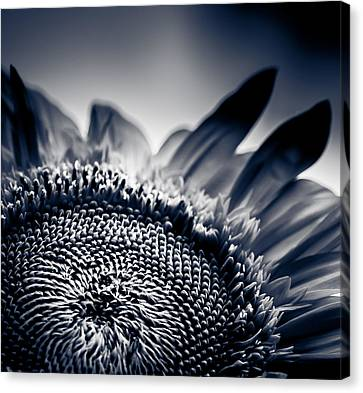 Moody Sunflower Canvas Print by Isabel Laurent
