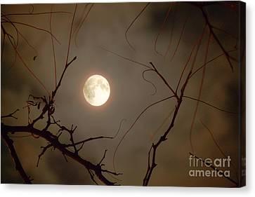 Moon Behind Branches Canvas Print by Deborah Smolinske