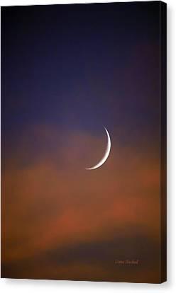 Moon Cradle Canvas Print by Donna Blackhall