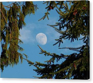 Moon Framed By Trees Canvas Print
