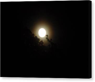 Canvas Print featuring the photograph Moon Glow by Philomena Zito