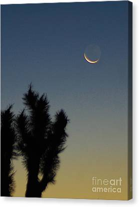 Moon Kissed Canvas Print by Angela J Wright