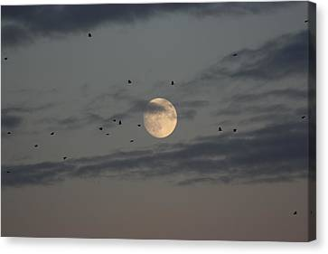 Canvas Print featuring the photograph Moon Lighting The Way by Paula Brown