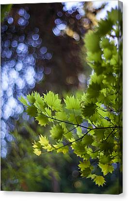 Moon Maples Montage Canvas Print by Mike Reid