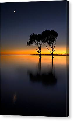 Moon Over Mangrove Trees Canvas Print