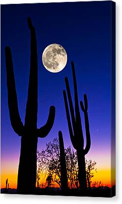 Moon Over Saguaro Cactus Carnegiea Canvas Print by Panoramic Images