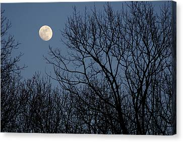 Moon Over Trees Canvas Print by Larry Bohlin