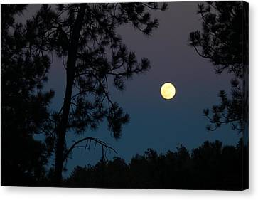 Moon Rise In Twilight Canvas Print