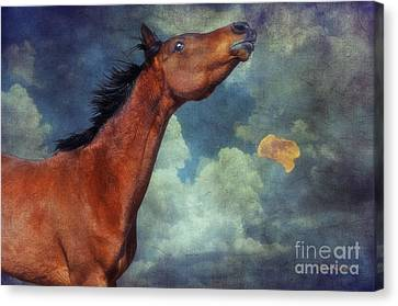 Canvas Print featuring the photograph Moon Song by Karen Slagle