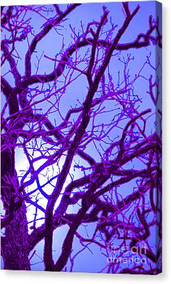 Moon Tree Purple Canvas Print by First Star Art