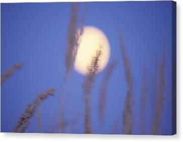 Moongrass Canvas Print by Ken Dietz