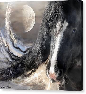 Horse Artwork Canvas Print - Moonlight And Valentino by Fran J Scott