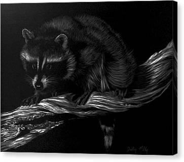 Moonlight Bandit Canvas Print