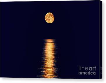 Moonlight Canvas Print by Charline Xia