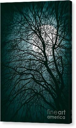 Creepy Canvas Print - Moonlight Forest by Carlos Caetano