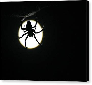Canvas Print featuring the photograph Moonlight Hunter by Christopher McKenzie