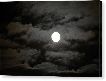 Moonlight Magic Canvas Print by Cathy Shiflett