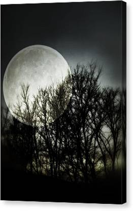 Moonlight Canvas Print by Marianna Mills