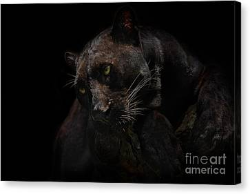 Moonlight Musings Canvas Print by Ashley Vincent
