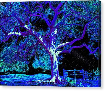 Moonlight Oak Canvas Print by Dan Terry
