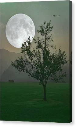 Moonlight On The Plains Canvas Print by Tom York Images