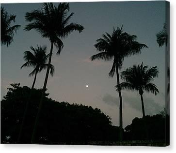 Moonlight Canvas Print by Raymel Garcia