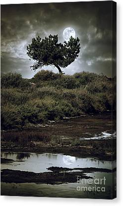 Sphere Canvas Print - Moonlight Swamp by Carlos Caetano