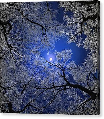 Moonlight Trees Canvas Print by Igor Zenin