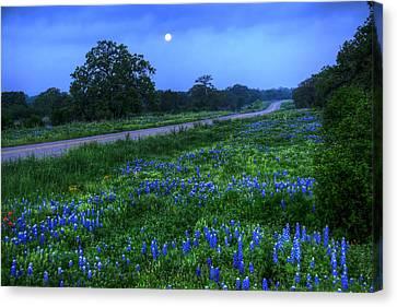 Moonlit Bluebonnets Canvas Print by Tom Weisbrook