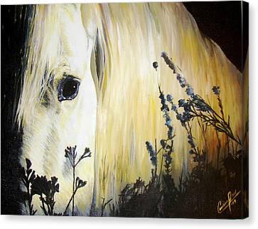 Moonlit Horse Canvas Print by Caroline  Reid