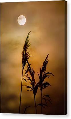 Moonlit Stalks Canvas Print by Gary Heller