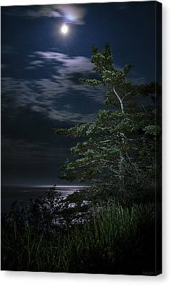 Canvas Print featuring the photograph Moonlit Treescape by Marty Saccone
